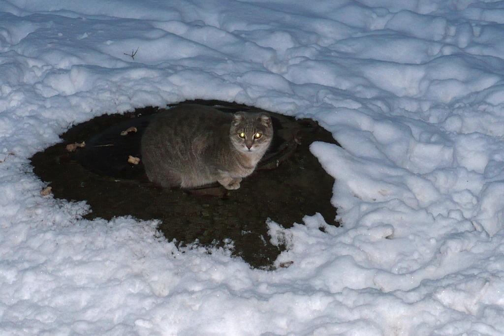 Кошки Московского