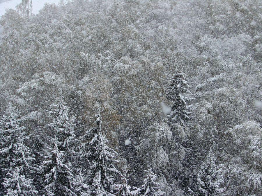 Снег на Покров (1).JPG
