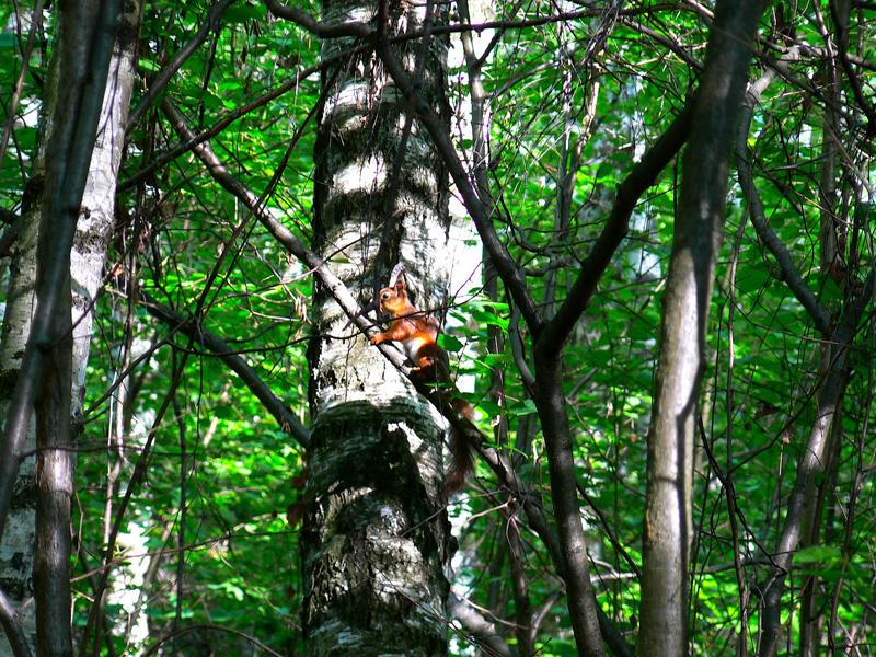 Белочка в весеннем лесу