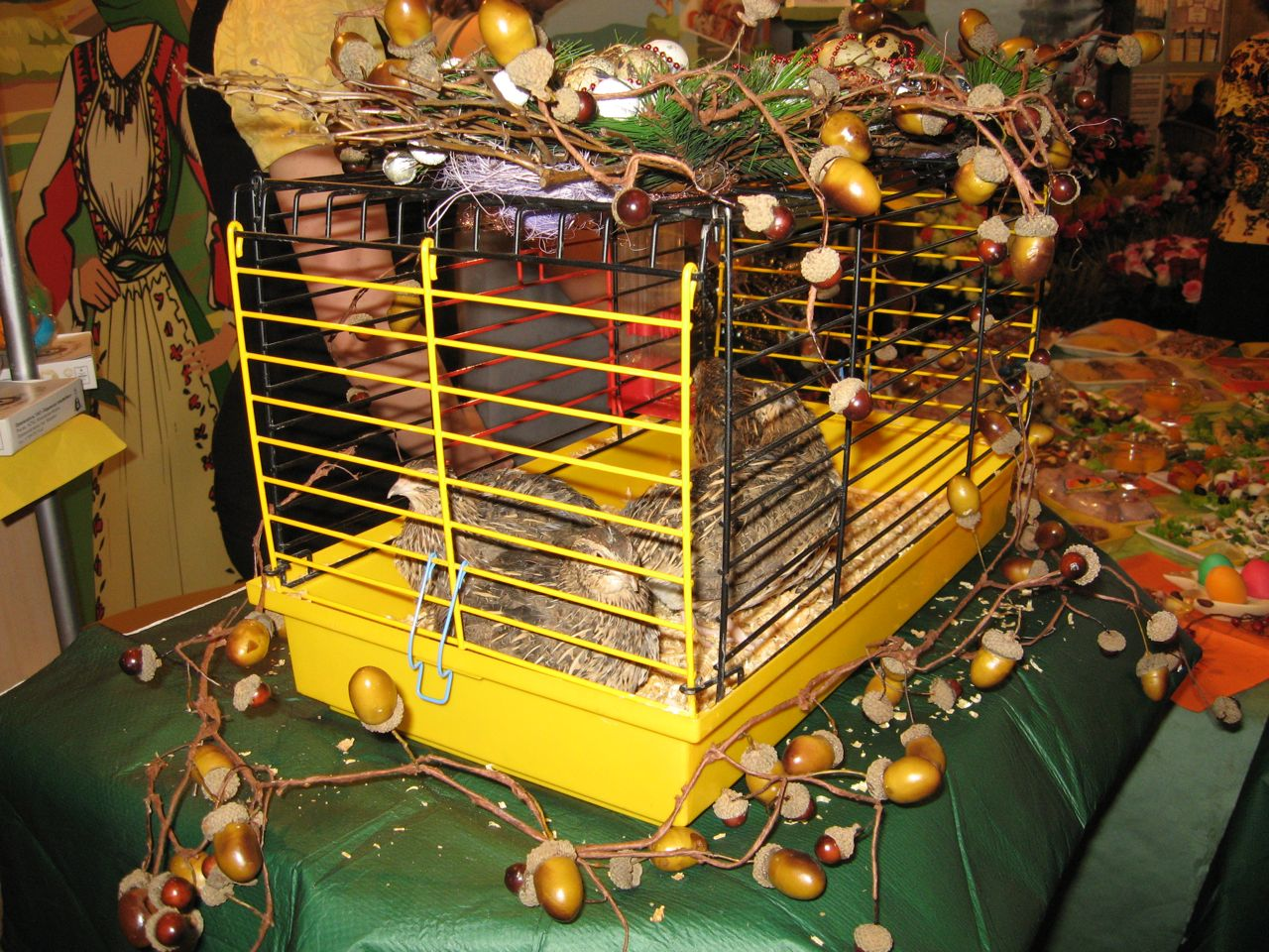 Перепелки Марьинской птицефабрики