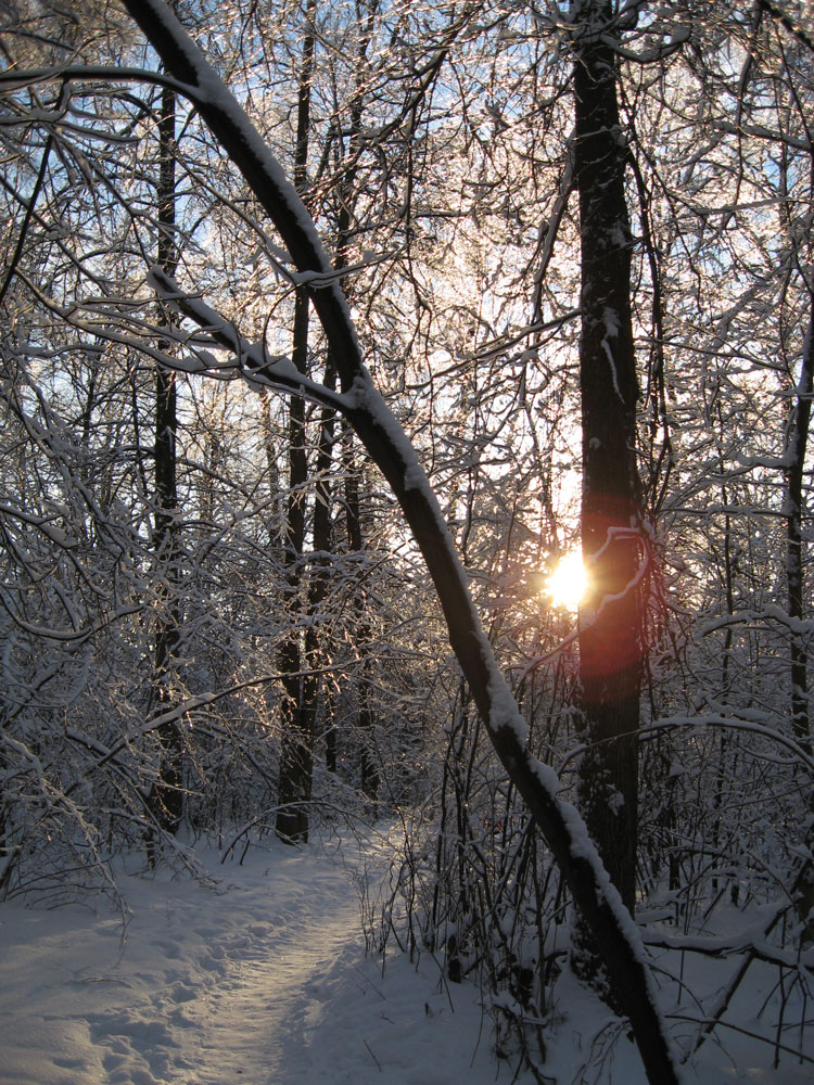 Зимняя тропинка