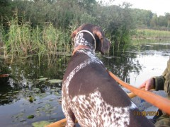Охота на уток с 10.09 по 12.09 2010г. Калужская область 020.