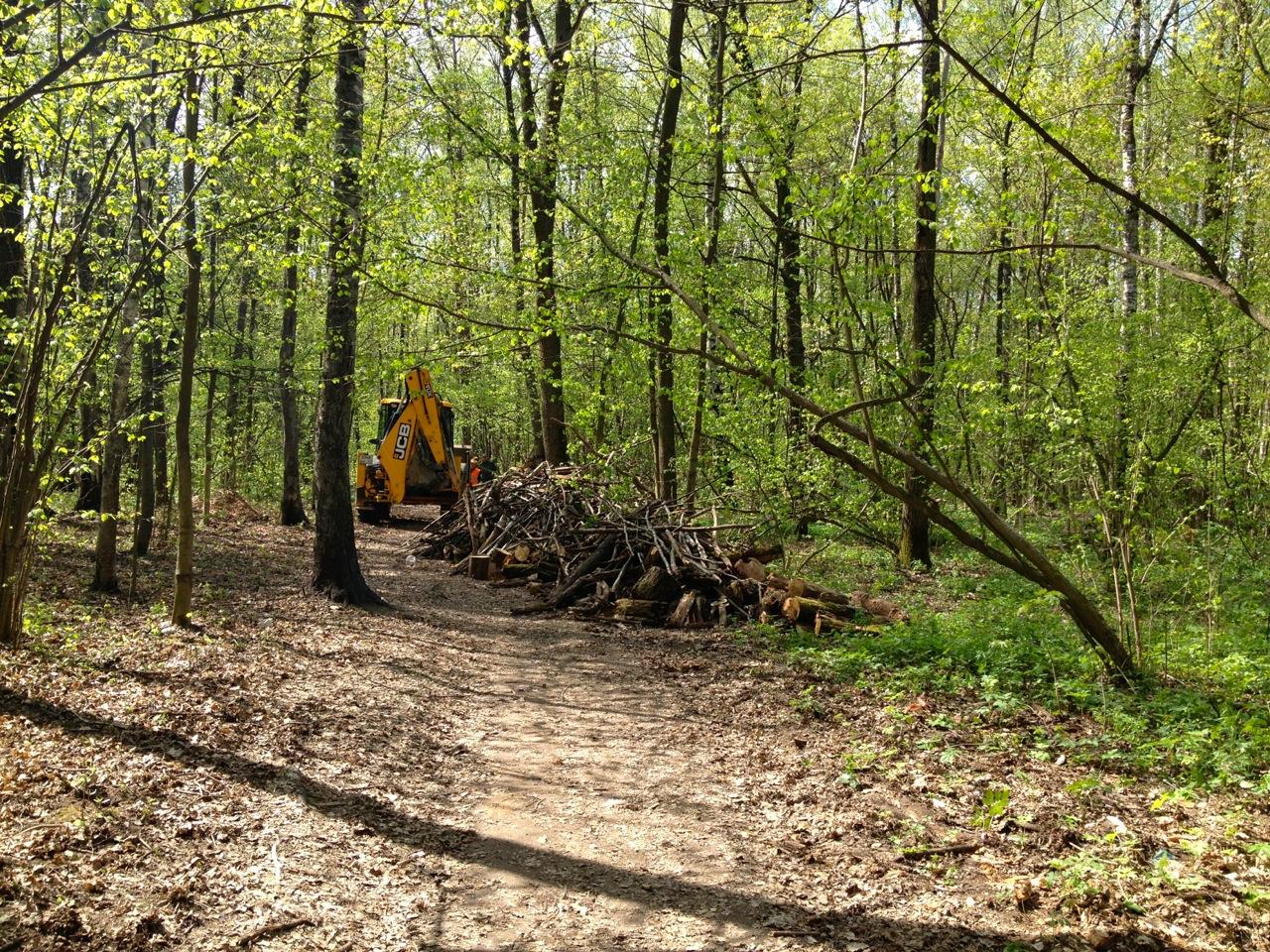 Чистят лес