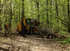 В лесу за полимиком