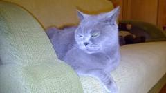 От освещения меняется оттенок шерсти, Очень боевой кошка )