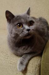 Очень боевой кошка )