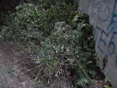Лесорубы у школ 1 мкр., 4.07.2014 г..