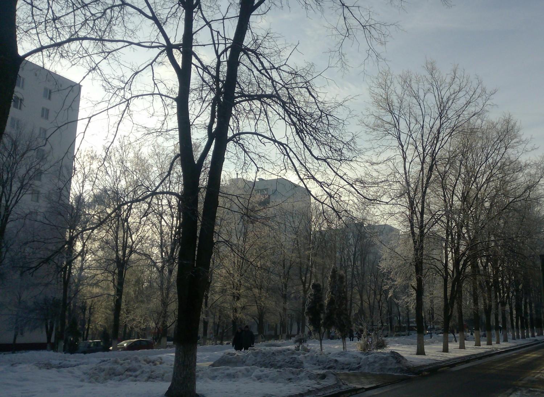Центральная аллея  (1 мкр. 22.01.2015 г.)