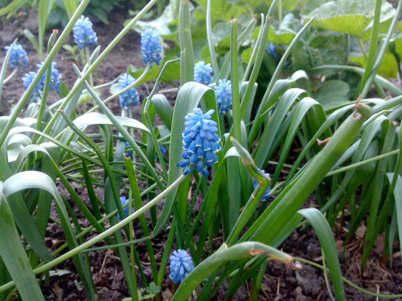 Май, весна, всё цветёт, красота )