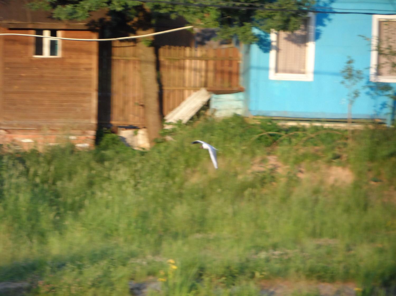 Прогулка вдоль Безымянного ручья 08.06.2014 г..