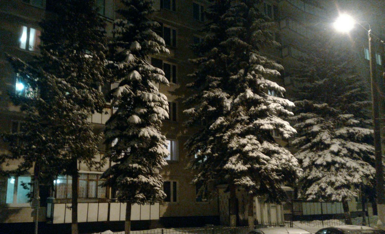 январь 2015 г., ёлочки у 41 дома в 1 мкр.