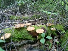 """Грибы в """"Мешковском лесу"""""""