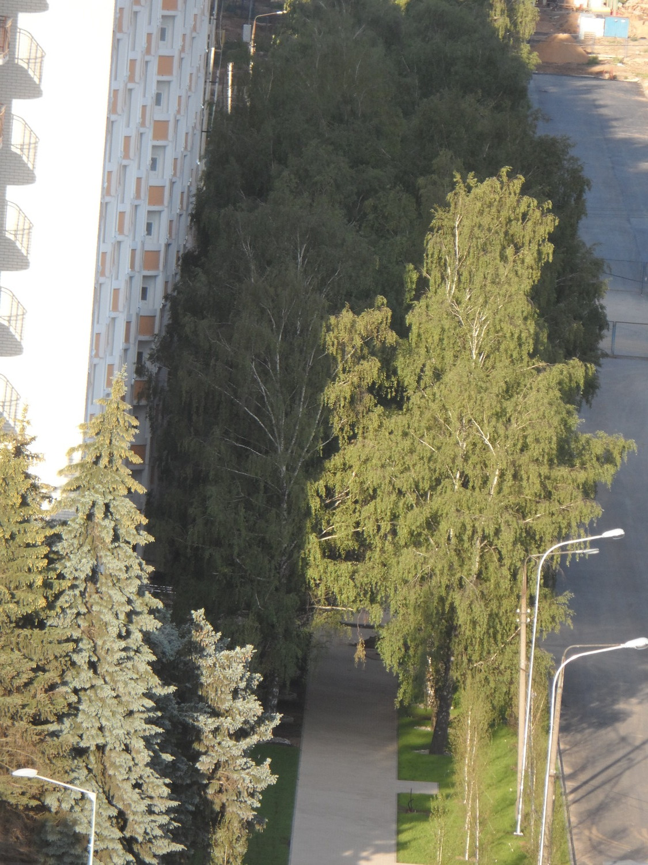 5 мкр., аллея вдоль 1-го дома по ул.Бианки