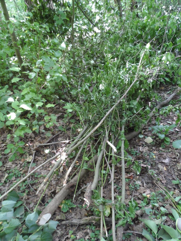 Кустарник и деревья выброшенные после вырубки в лес, за школьный забор