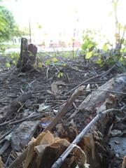 Очередной сломанный под корень ствол