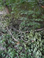 Кустарник и ветви сваливают за демонтированным забором в лесу