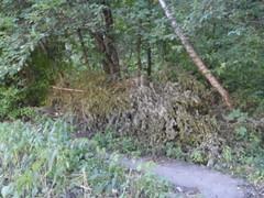 Кустарник, спиленные деревья и ветви сваливают за демонтированным забором в лесу