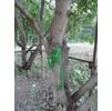 При демонтаже ограждений сломаные ветви маскируют зелёной краской )