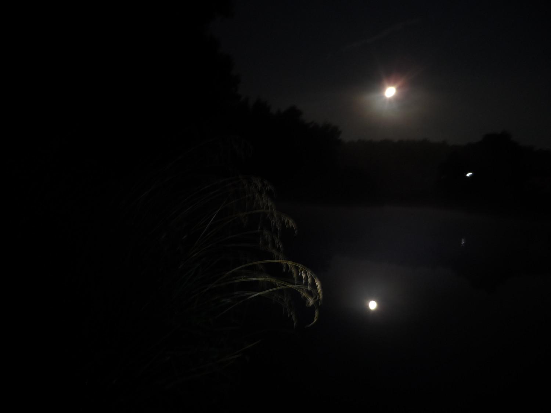 Пруд в Мешково ночью