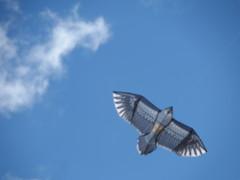 Воздушный змей