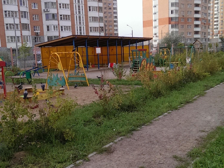 Лиса в Московском 1