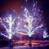 Деревья на аллее
