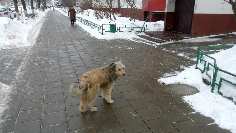 Любимая собака нашей детворы из 1 мкр.