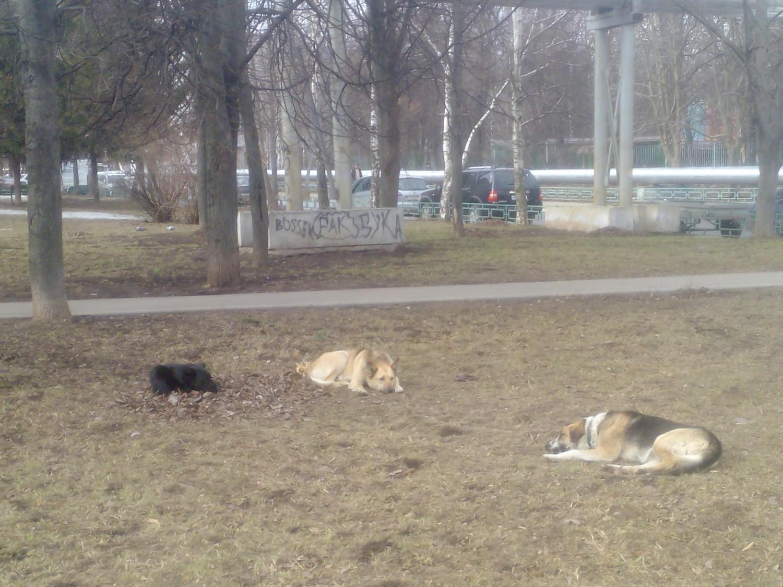 """""""Дворяне отдыхают"""", собаки из 1 мкр."""