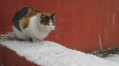 Первый снег в Московском