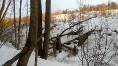Окрестности у Барановского пруда.