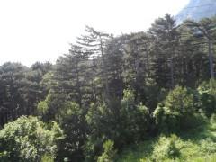 Склон горы Ай-Петри