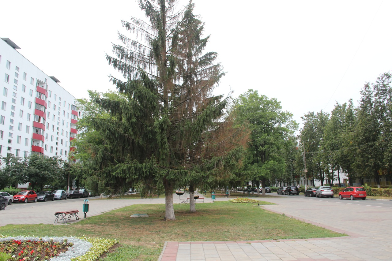 Аллея-бульвар-центр в г Московский