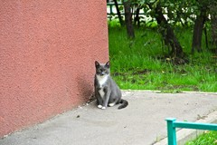 Кот у 24-го дома