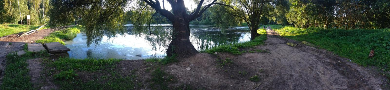 Мешковский пруд зацвел