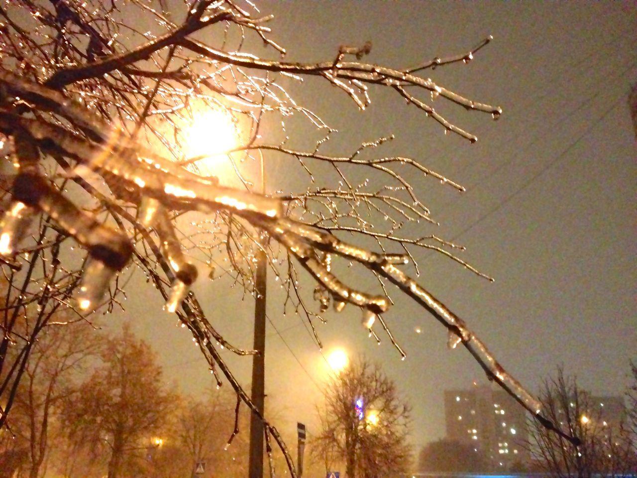 Ледяные ветки