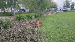 Остатки упавшего дерева возле начальной школы